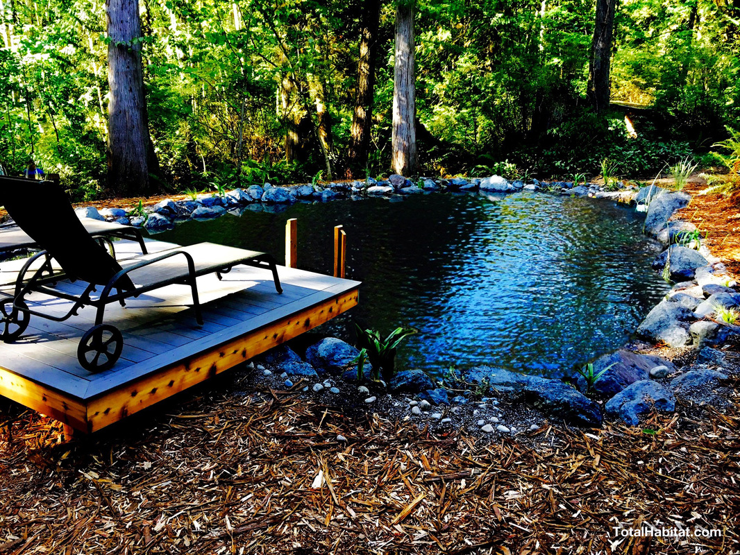 Photo gallery natural swimming pool ponds total habitat for Pond companies near me